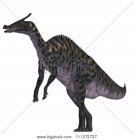Saurolophus Dinosaur On White