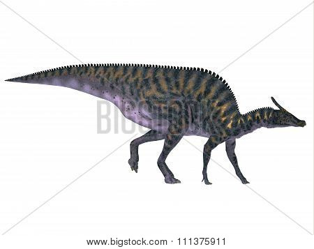 Saurolophus On White
