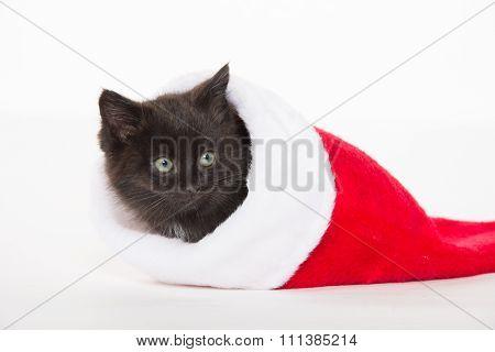 Cute Black Kitten In Christmas Stocking