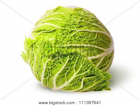 Chinese Cabbage Top View