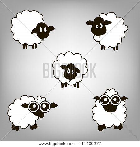 Five Lambs