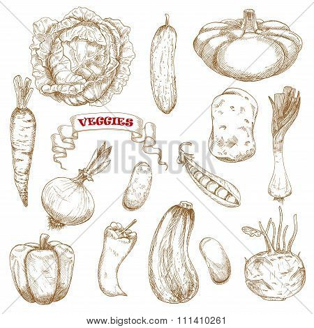 Healthy organic isolated vegetables sketches