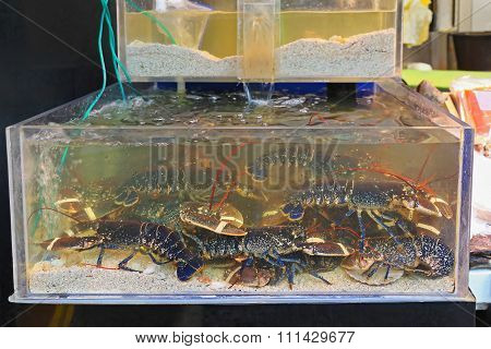 Lobsters In Tank