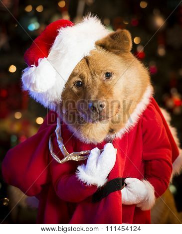 Dog dressed up as Santa Claus with Christmas tree in the background.