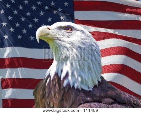 Patriottische Eagle