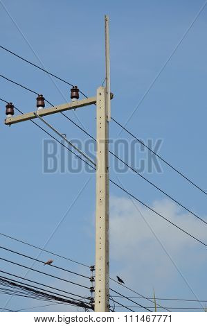 birds hanging on the electricity wire