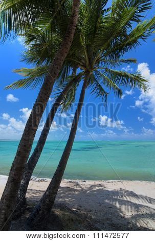 Tropical Beach With Three Coconut Palms