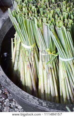 green lemongrass on black enamelware