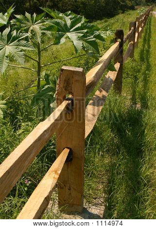 Fence Run