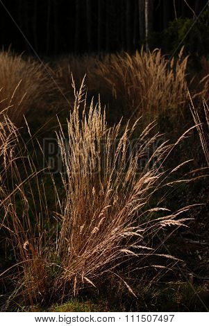 Clump of Dry Grass