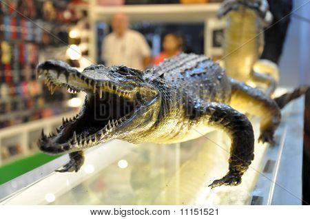 crocodile shop