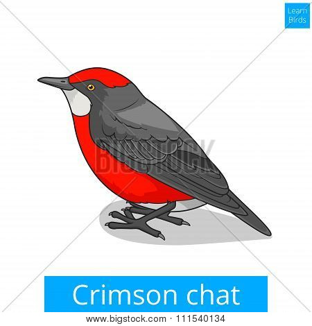 Crimson chat bird educational game vector