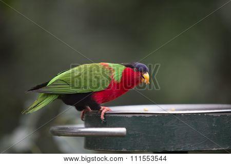 Tropical Bird Eating Grub