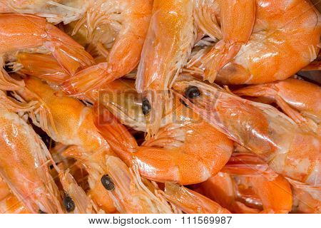 Fresh Shrimps Boiled And Steamed