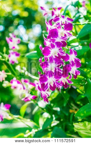 Purple Orchid In The Garden