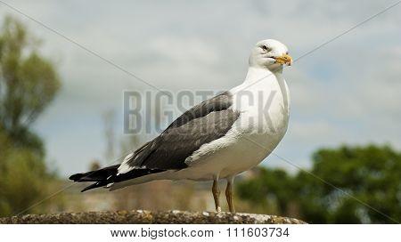 Pigeon In Bath Spa