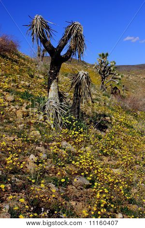 Desert Flowers
