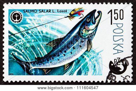 Postage Stamp Poland 1979 Atlantic Salmon, Fish