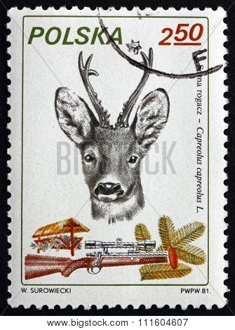 Postage Stamp Poland 1981 European Roe Deer