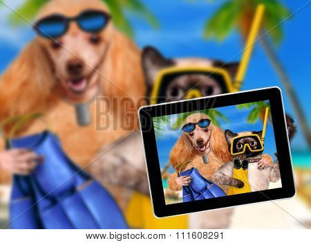 dog with cat taking a selfie together with a tablet