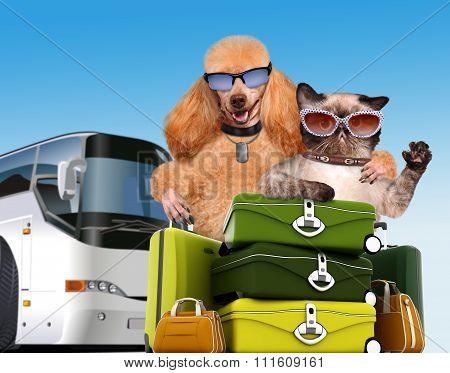 Dog and cat traveler.