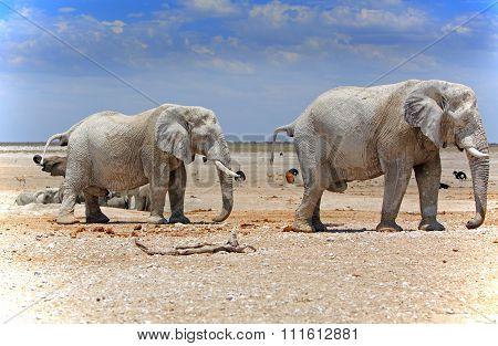 Elephants next to a waterhole with a vibrant blue sky background