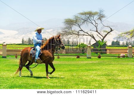 Peruvian Paso Horse And Rider