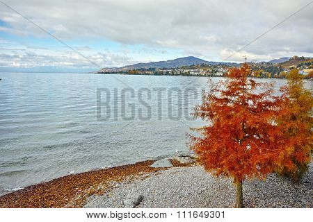 Red tree on Lake Geneva in Montreux, canton of Vaud