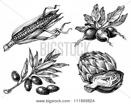 Vegetables set, isolated drawings black over white, etch style. Corn, radish, olives and artichoke