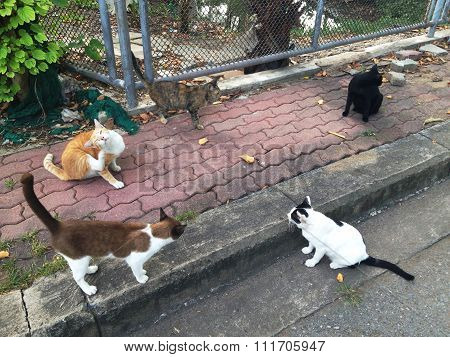 The Group Of Stray Cat In A Park