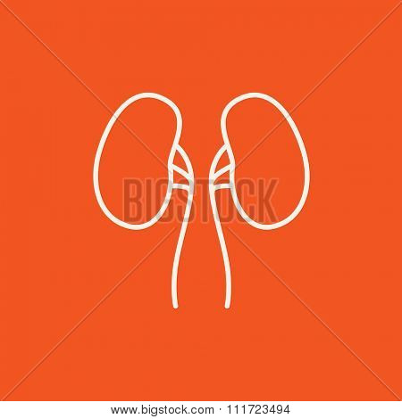 Kidney line icon for web, mobile and infographics. Vector white icon isolated on red background.