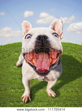 a dog with his mouth wide open in the middle of a grassy field and a bright blue sky