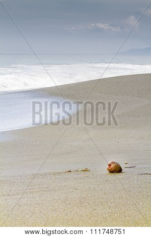 Single Coconut Washed Up On A Sandy Tropical Shore