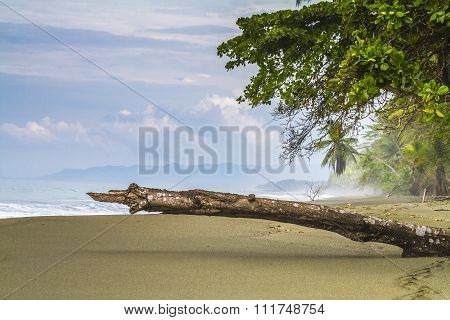 Tropical Palm Fringed Beach With Angled Log In Foreground