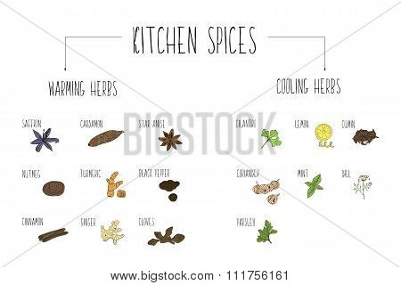 Hand-sketched A Large Collection Of Elements Warming And Cooling Spices In Our Kitchen. Herbs And Su