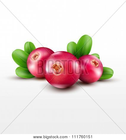 isolated cranberries with green leaves on a white backgro