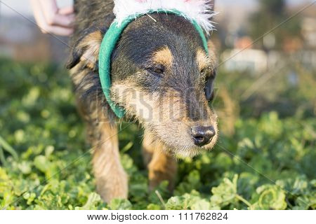 Cute Mix Breed Dog Close Up Portait