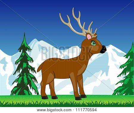 Deer on glade