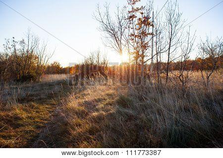 Vegetation In The Karst Countryside