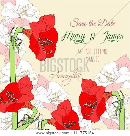 Background with red pink amaryllis