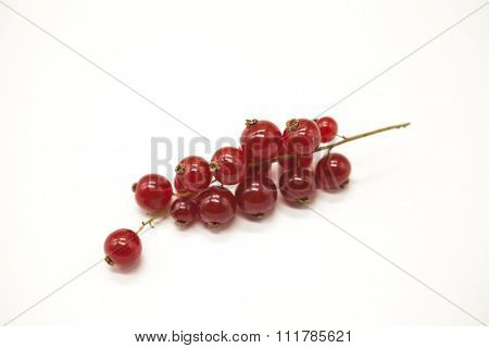 Bright juicy fresh branch of red currant close up on a white background