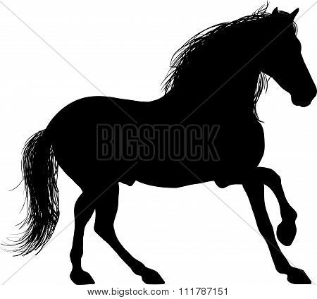 A Silhouette of a horse entire