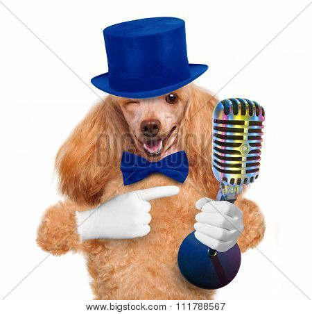 Dog with a microphone