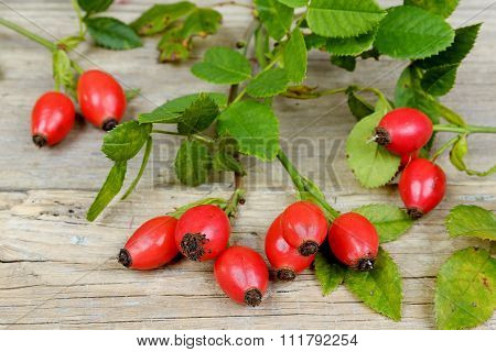 Rosehips On An Old Wooden Table