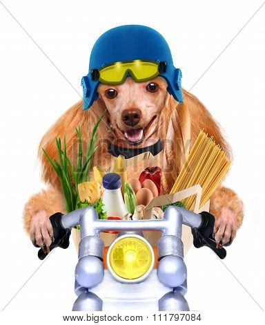 Beautiful red dog riding on a motorbike with the products.