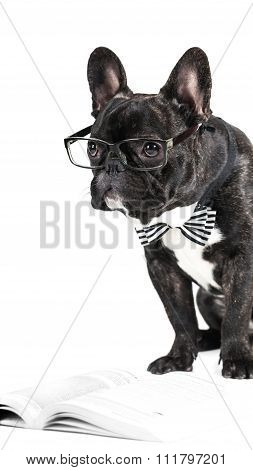 French Bulldog In Glasses And A Bow Tie