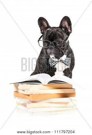 French Bulldog In Glasses