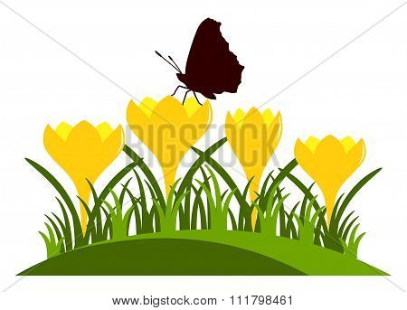Crocuses And Butterfly