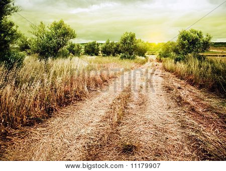 road and wheat field