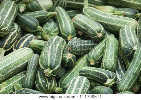 Lots of fresh zucchini